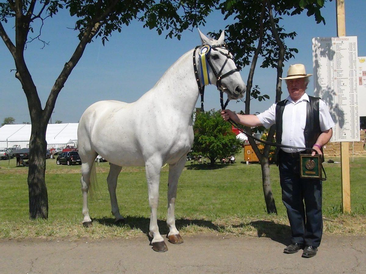 Böröcz Pál Orsolya nevű lipicai lova első díjas lett
