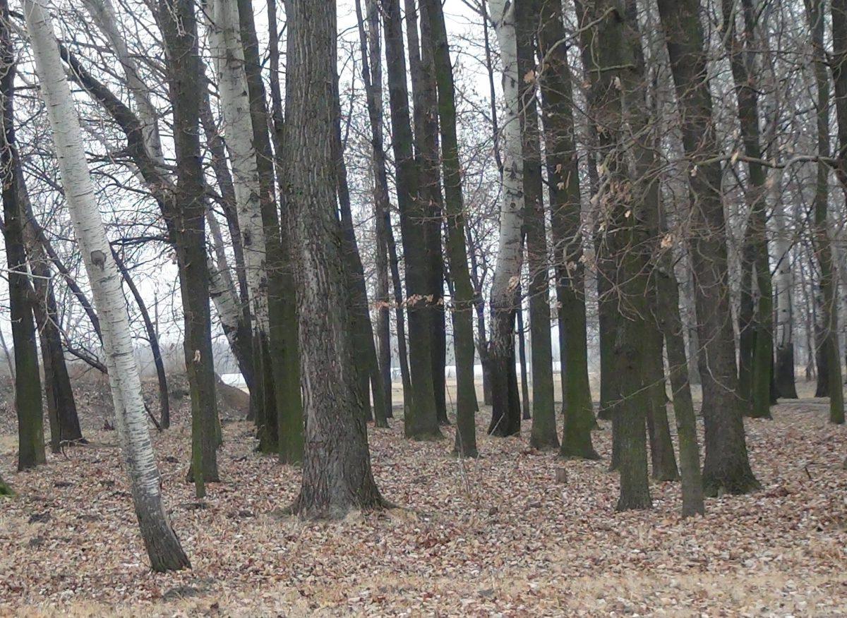 Engedély kell a fakitermeléshez