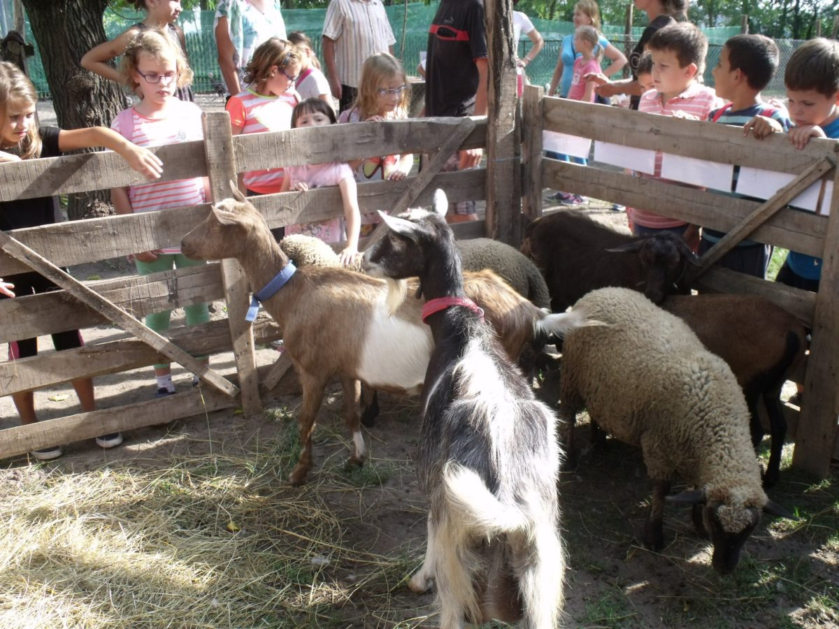 A balástyai Állatsimogató látogató csoportokat vár