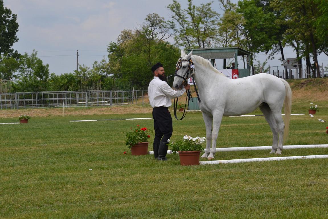 Az idén is díjazták Böröcz Pál lipicai lovát