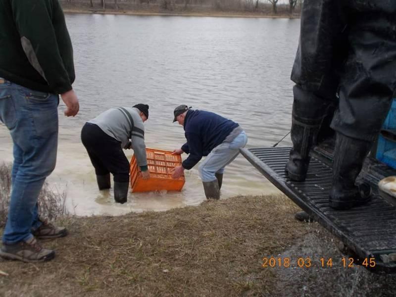 Haltelepítés a Balástyai Alkotmány Horgászegyesület víztározóján